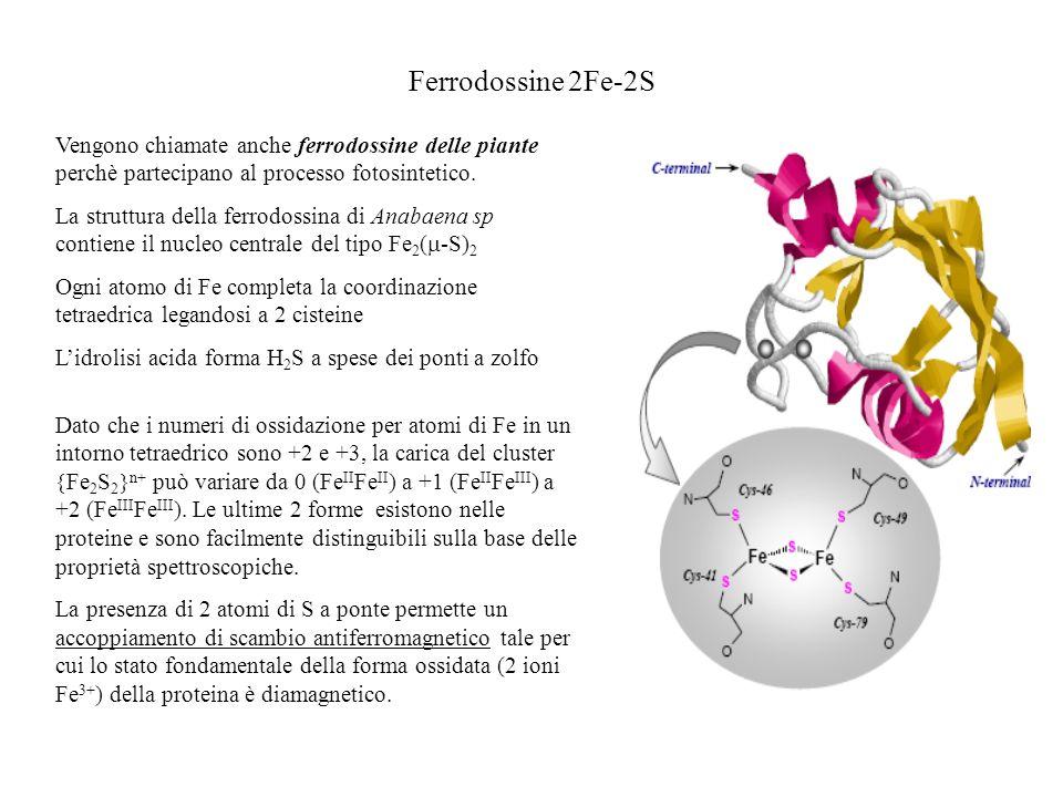 Ferrodossine 2Fe-2S Vengono chiamate anche ferrodossine delle piante perchè partecipano al processo fotosintetico.