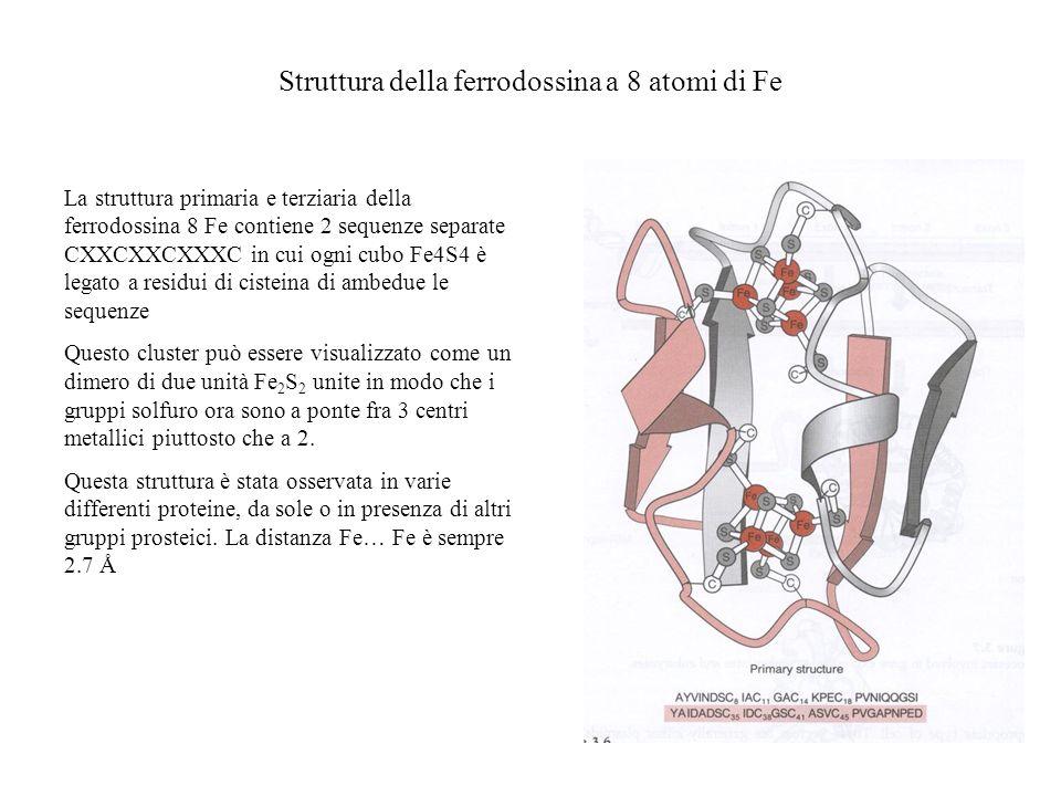 Struttura della ferrodossina a 8 atomi di Fe