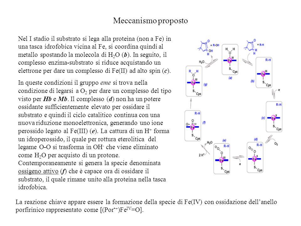 Meccanismo proposto
