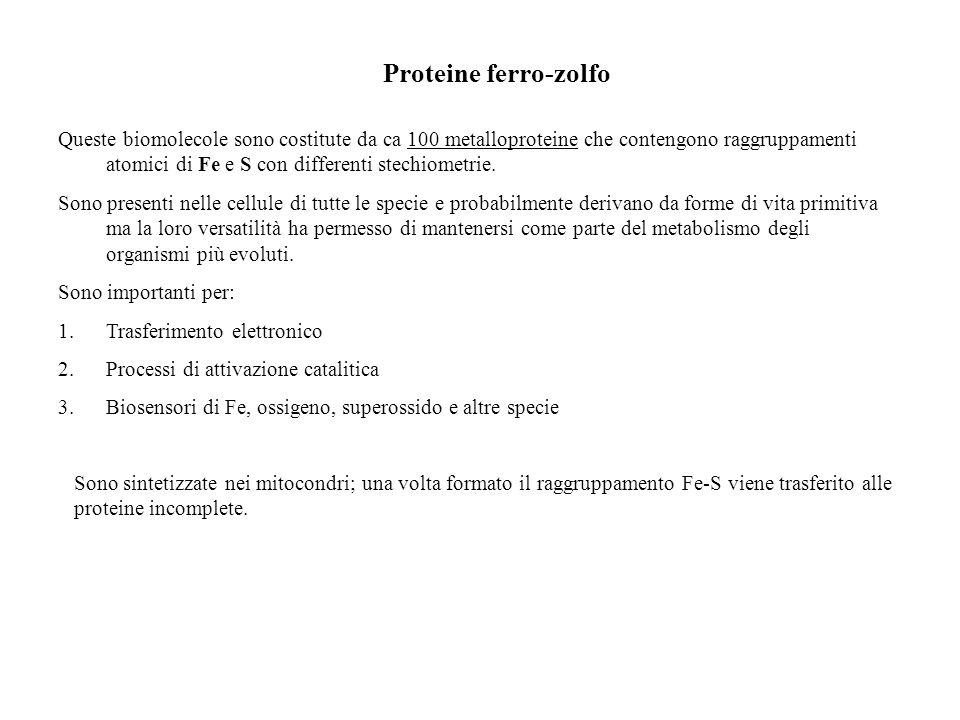 Proteine ferro-zolfo