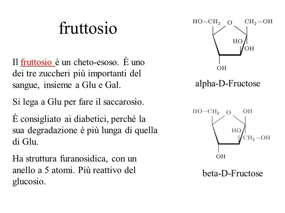 fruttosio Il fruttosio è un cheto-esoso. È uno dei tre zuccheri più importanti del sangue, insieme a Glu e Gal.