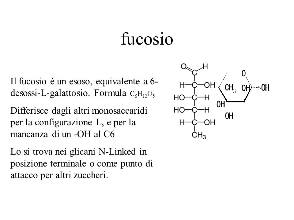 fucosio Il fucosio è un esoso, equivalente a 6-desossi-L-galattosio. Formula C6H12O5.