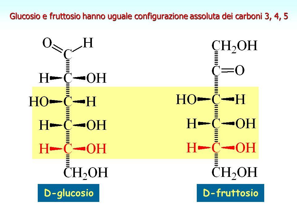 D-glucosio D-fruttosio