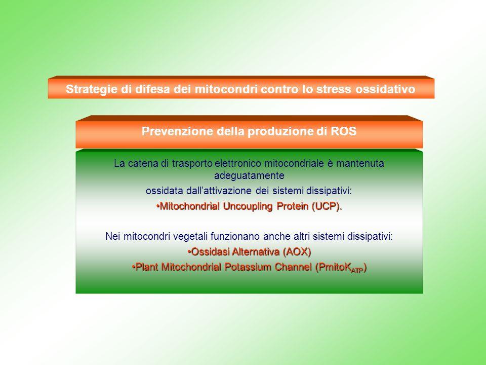 Strategie di difesa dei mitocondri contro lo stress ossidativo