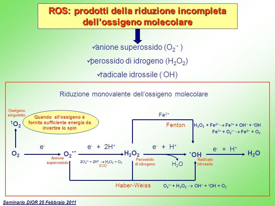 ROS: prodotti della riduzione incompleta dell'ossigeno molecolare