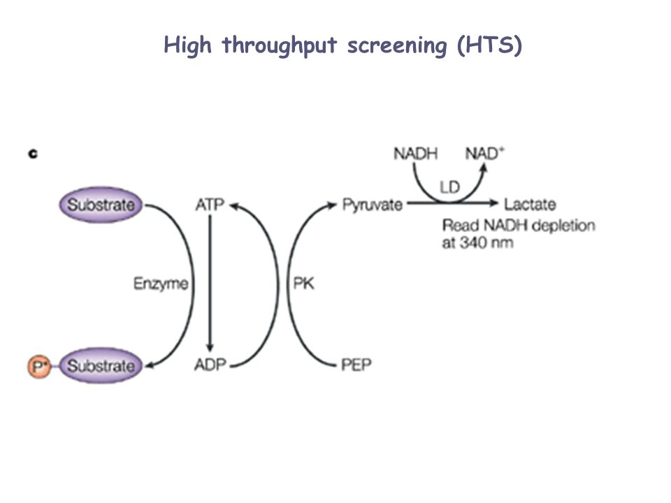 High throughput screening (HTS)