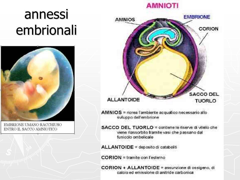 annessi embrionali