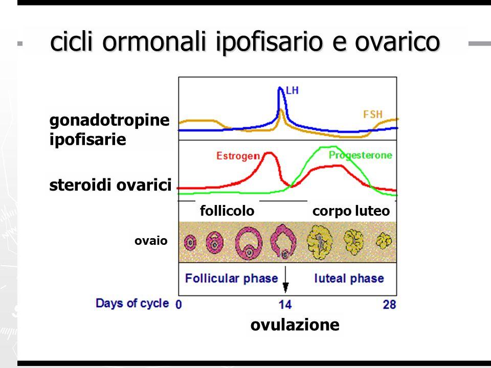 cicli ormonali ipofisario e ovarico