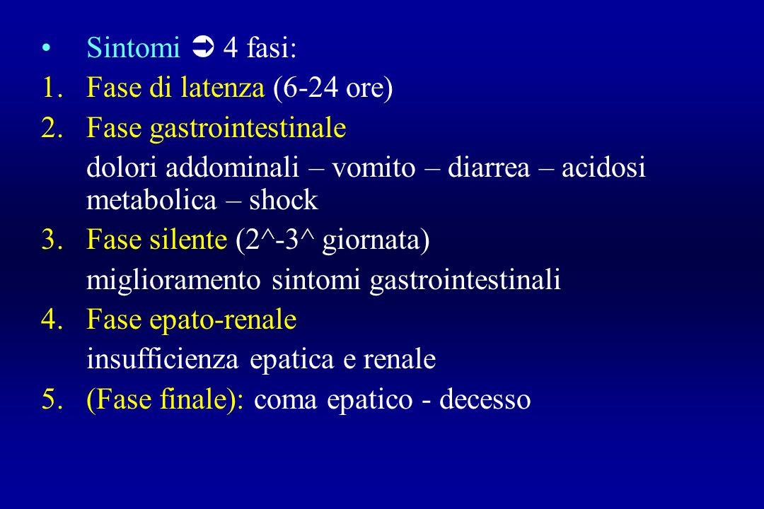 Sintomi  4 fasi: Fase di latenza (6-24 ore) Fase gastrointestinale. dolori addominali – vomito – diarrea – acidosi metabolica – shock.