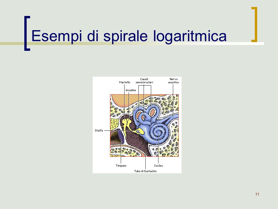 Esempi di spirale logaritmica