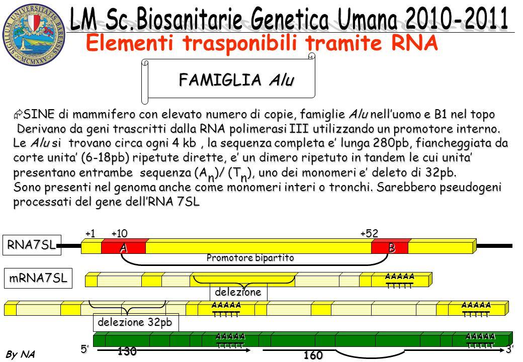 Elementi trasponibili tramite RNA