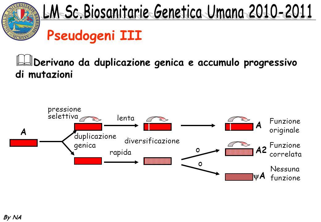 Pseudogeni III Derivano da duplicazione genica e accumulo progressivo di mutazioni. pressione. selettiva.