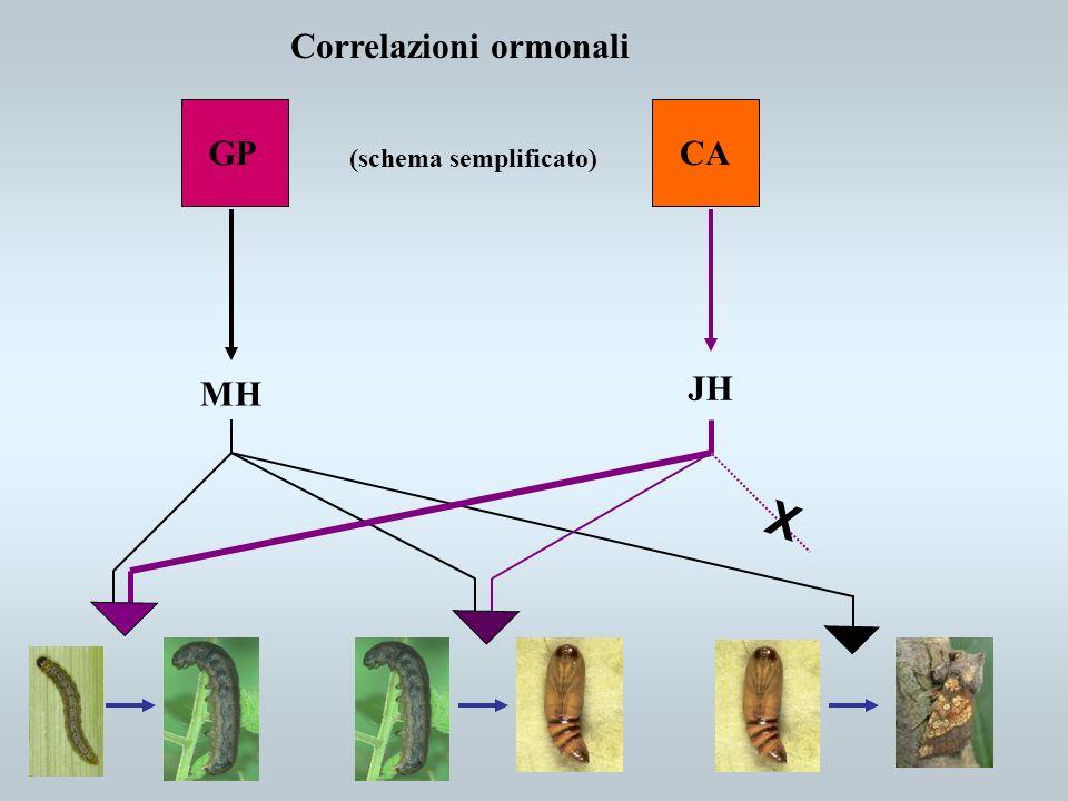 Correlazioni ormonali
