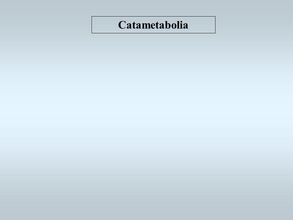 Catametabolia