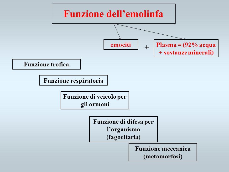 Funzione dell'emolinfa