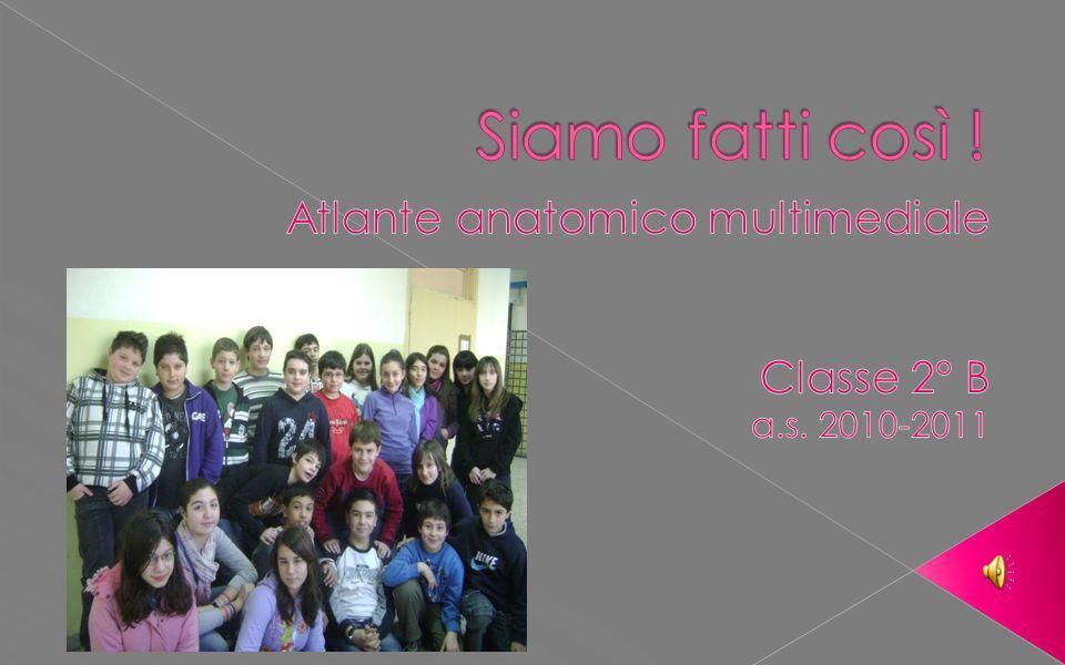 Atlante anatomico multimediale Classe 2° B a.s. 2010-2011