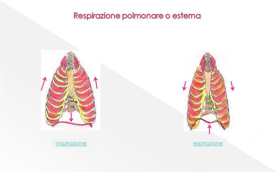 Respirazione polmonare o esterna