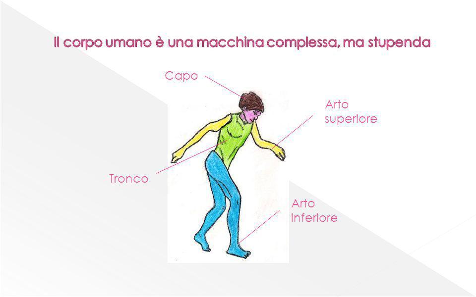 Il corpo umano è una macchina complessa, ma stupenda