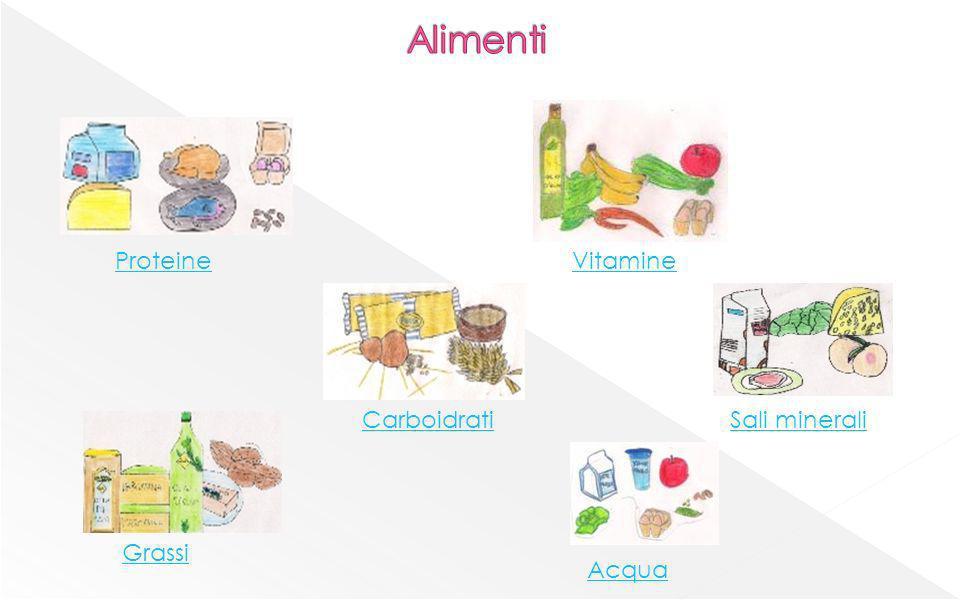 Alimenti Proteine Vitamine Carboidrati Sali minerali Grassi Acqua
