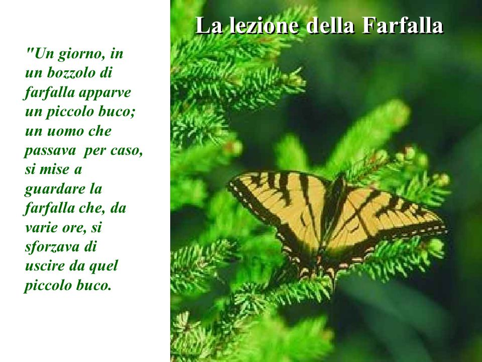 La lezione della Farfalla