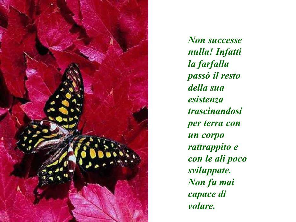 Non successe nulla! Infatti la farfalla passò il resto della sua esistenza trascinandosi per terra con un corpo rattrappito e con le ali poco sviluppate.