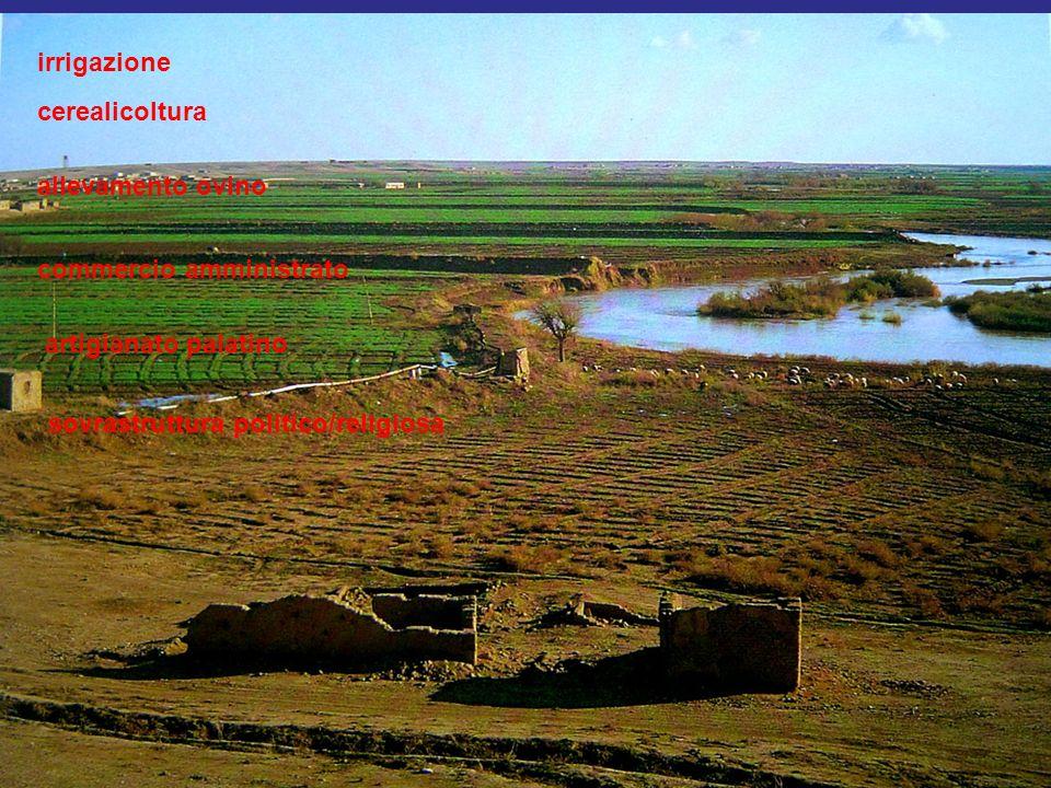 irrigazione cerealicoltura. allevamento ovino. commercio amministrato.