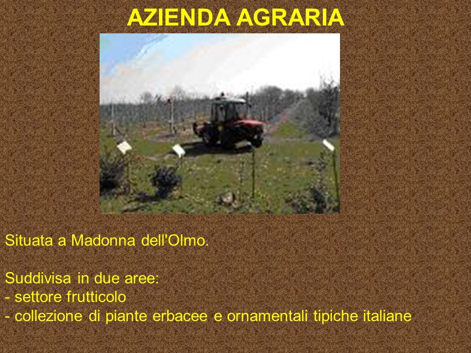 AZIENDA AGRARIA Situata a Madonna dell Olmo. Suddivisa in due aree: