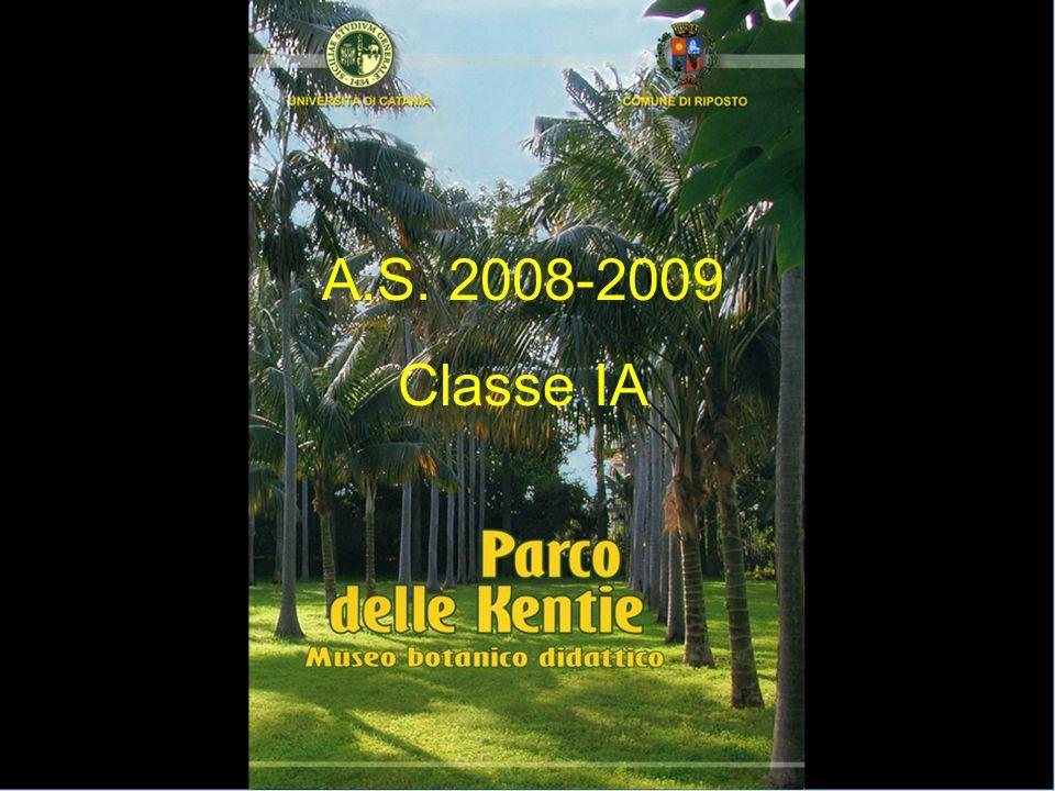 A.S. 2008-2009 Classe IA
