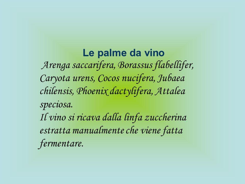 Le palme da vinoArenga saccarifera, Borassus flabellifer, Caryota urens, Cocos nucifera, Jubaea chilensis, Phoenix dactylifera, Attalea speciosa.