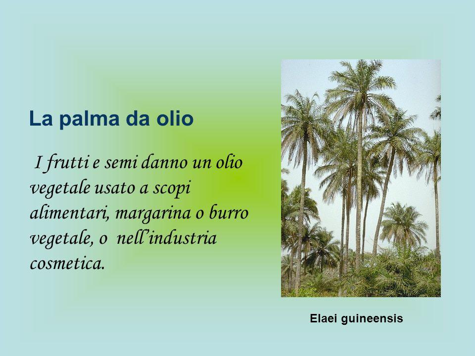 La palma da olioI frutti e semi danno un olio vegetale usato a scopi alimentari, margarina o burro vegetale, o nell'industria cosmetica.