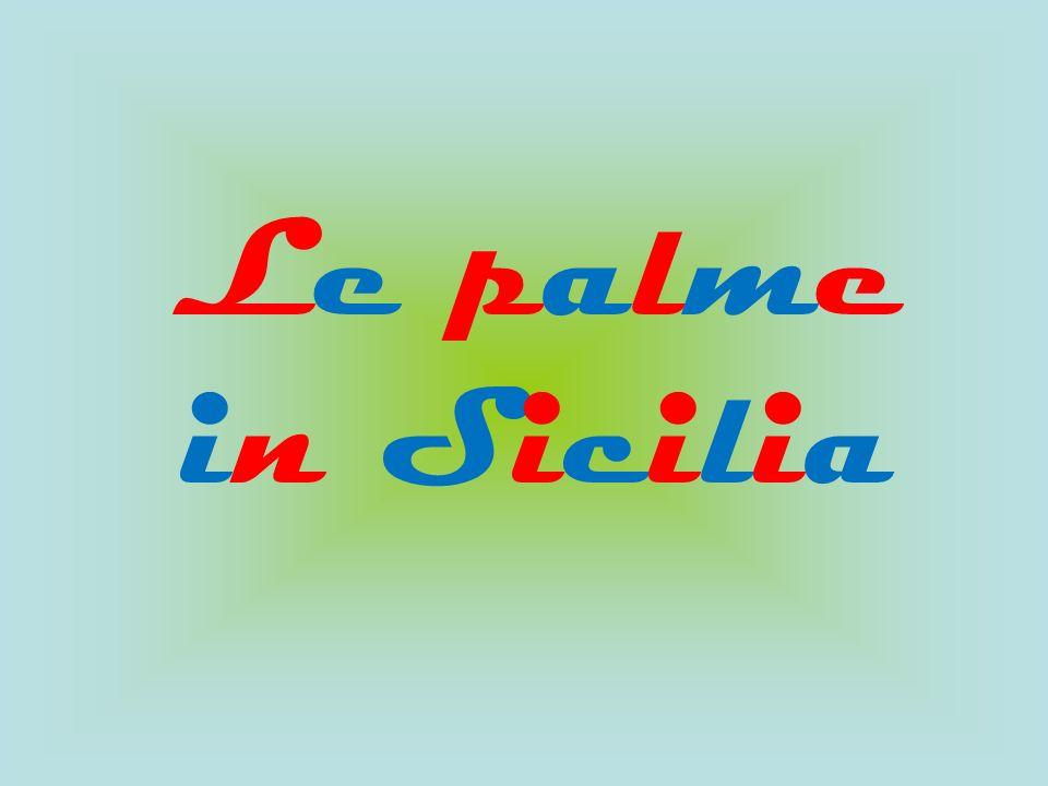 Le palme in Sicilia