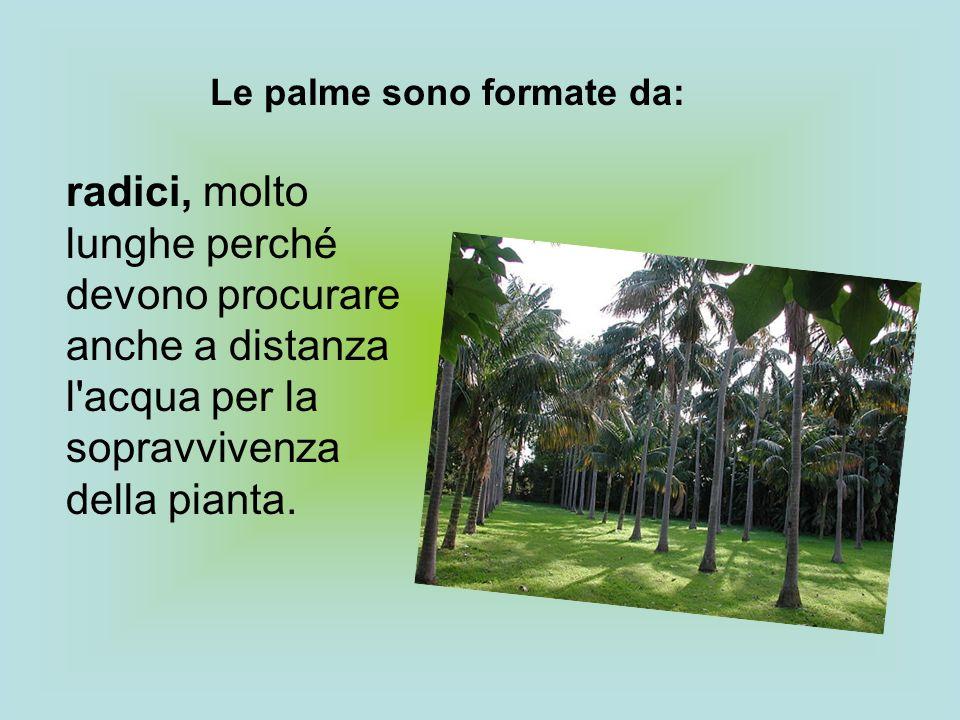 Le palme sono formate da: