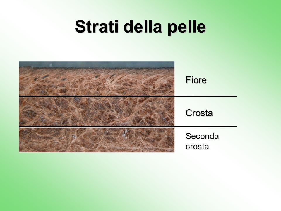 Strati della pelle Fiore Crosta Seconda crosta