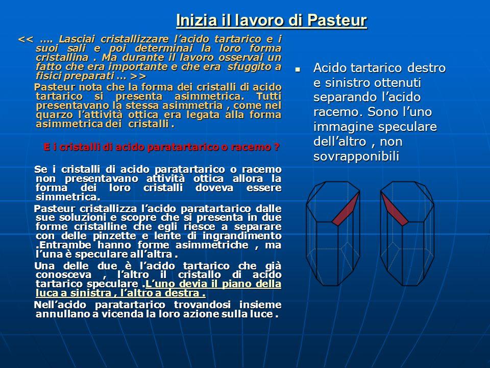 Inizia il lavoro di Pasteur