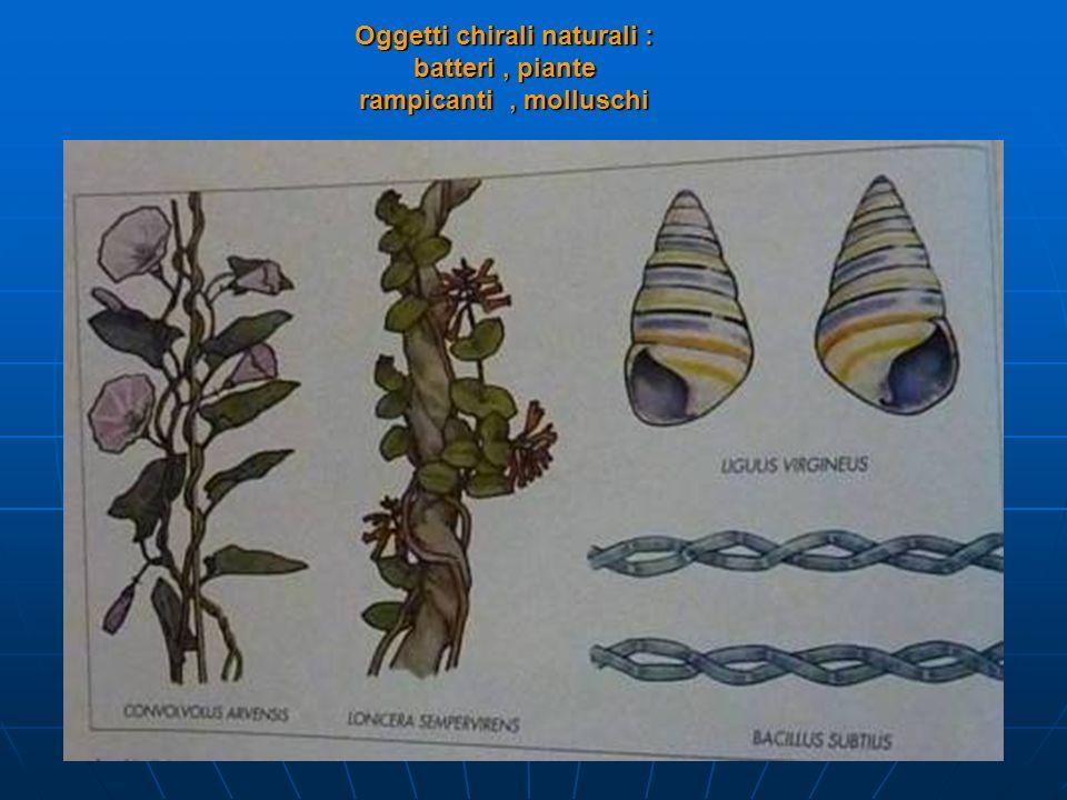 Oggetti chirali naturali : batteri , piante rampicanti , molluschi