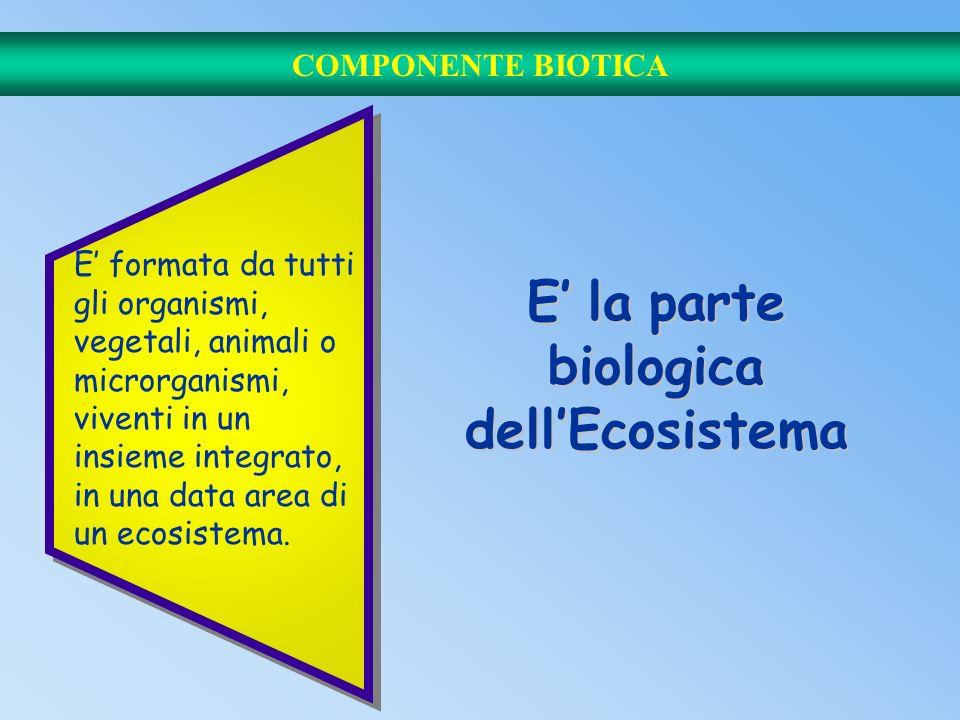 E' la parte biologica dell'Ecosistema