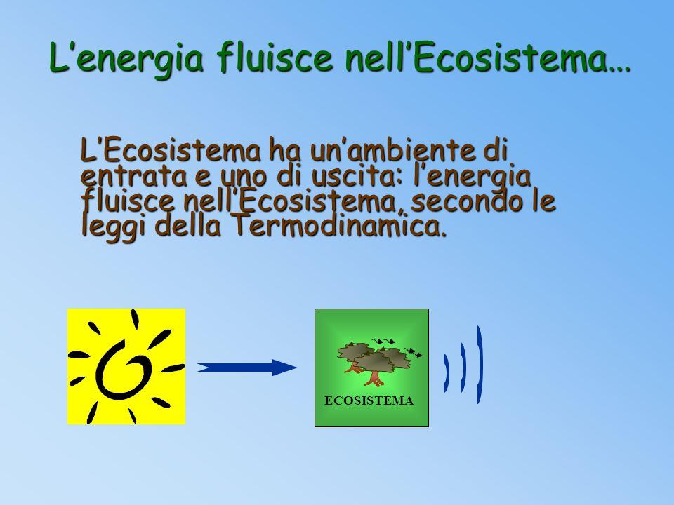 L'energia fluisce nell'Ecosistema…