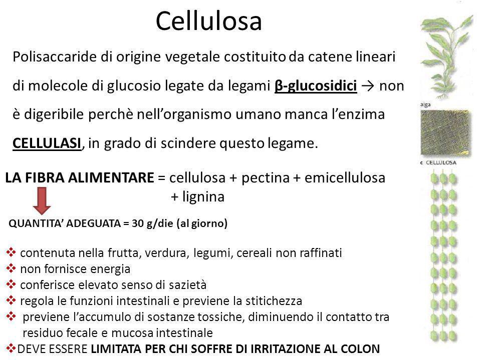 Cellulosa Polisaccaride di origine vegetale costituito da catene lineari.
