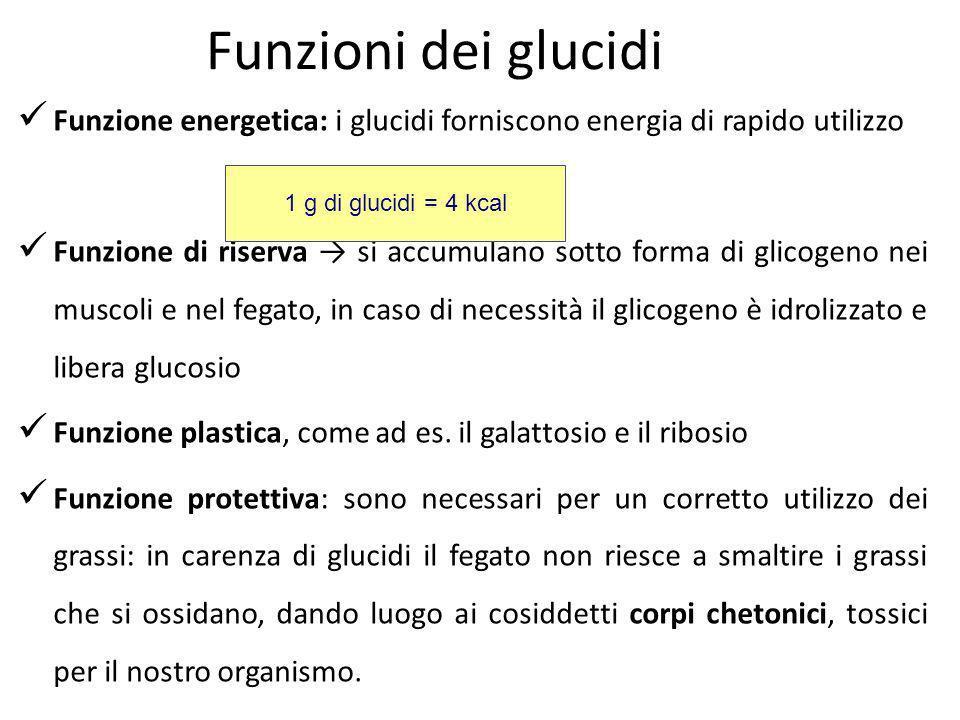 Funzioni dei glucidi Funzione energetica: i glucidi forniscono energia di rapido utilizzo.