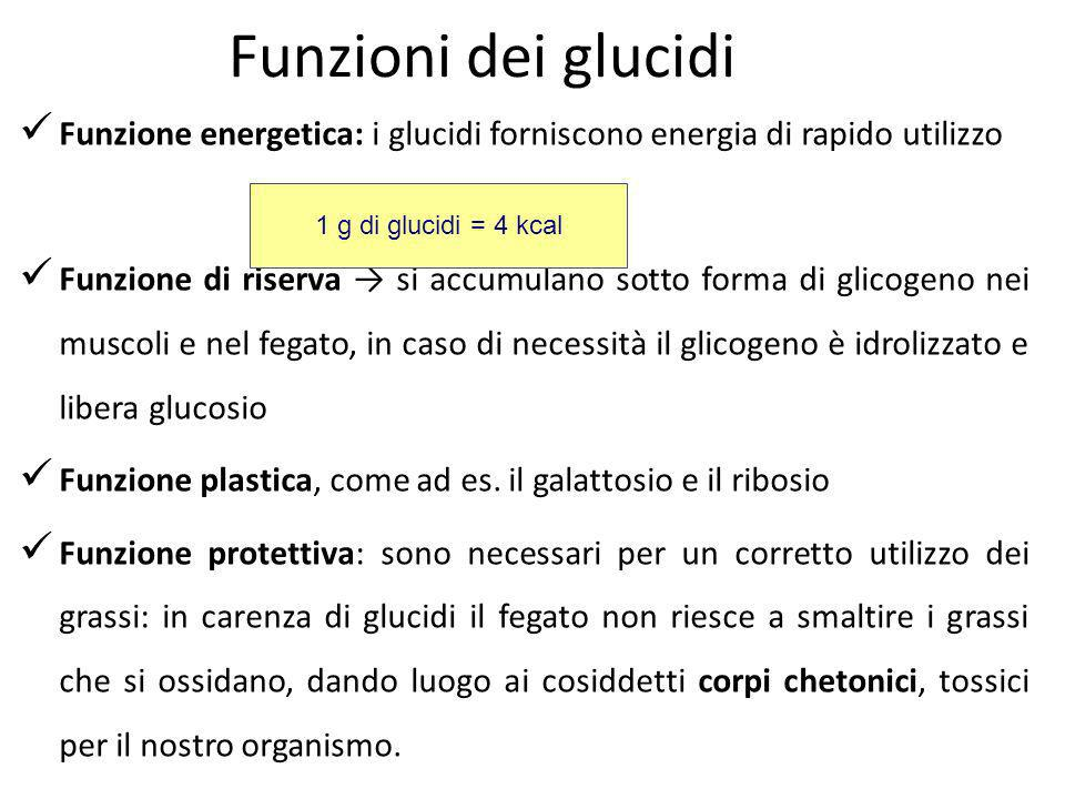 Funzioni dei glucidiFunzione energetica: i glucidi forniscono energia di rapido utilizzo.
