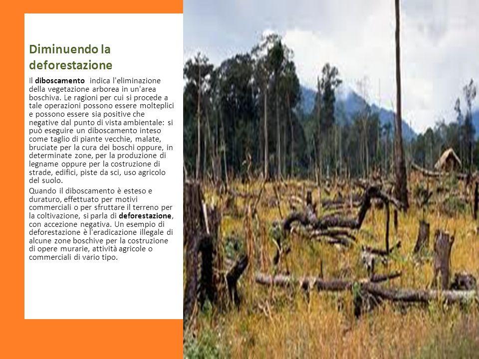 Diminuendo la deforestazione