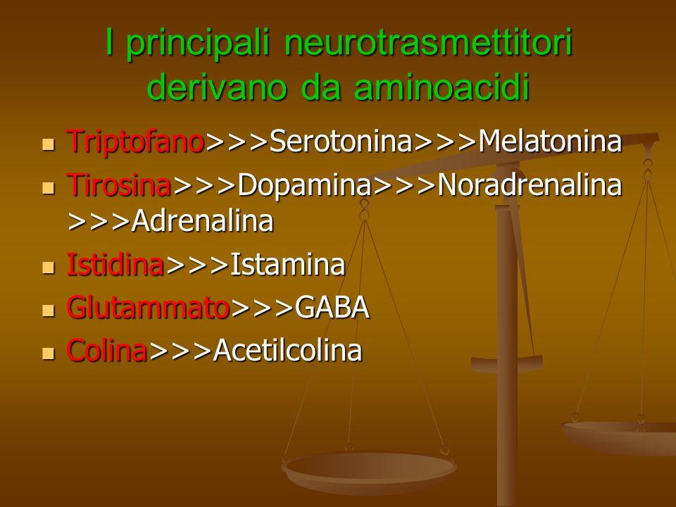 I principali neurotrasmettitori derivano da aminoacidi