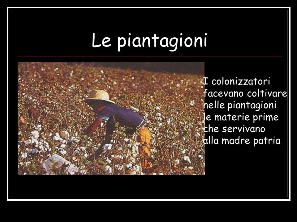 Le piantagioni I colonizzatori facevano coltivare nelle piantagioni