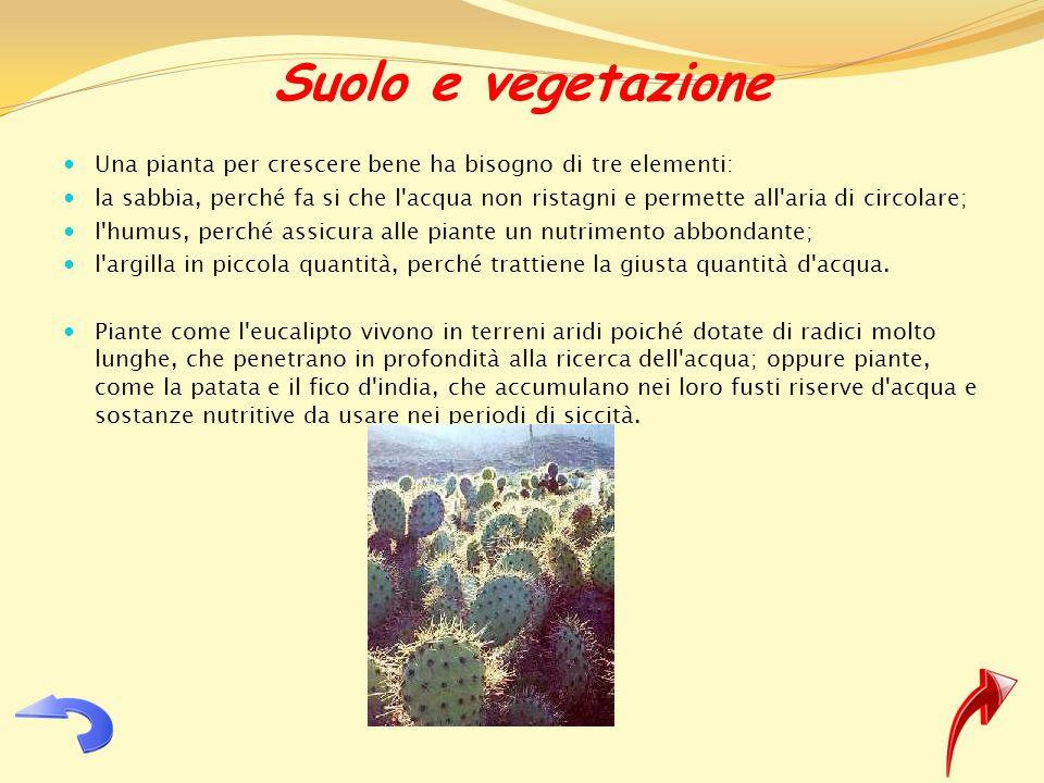 Suolo e vegetazione Una pianta per crescere bene ha bisogno di tre elementi: