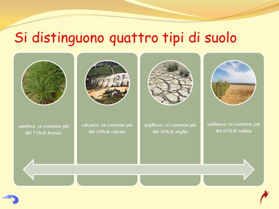 Si distinguono quattro tipi di suolo: