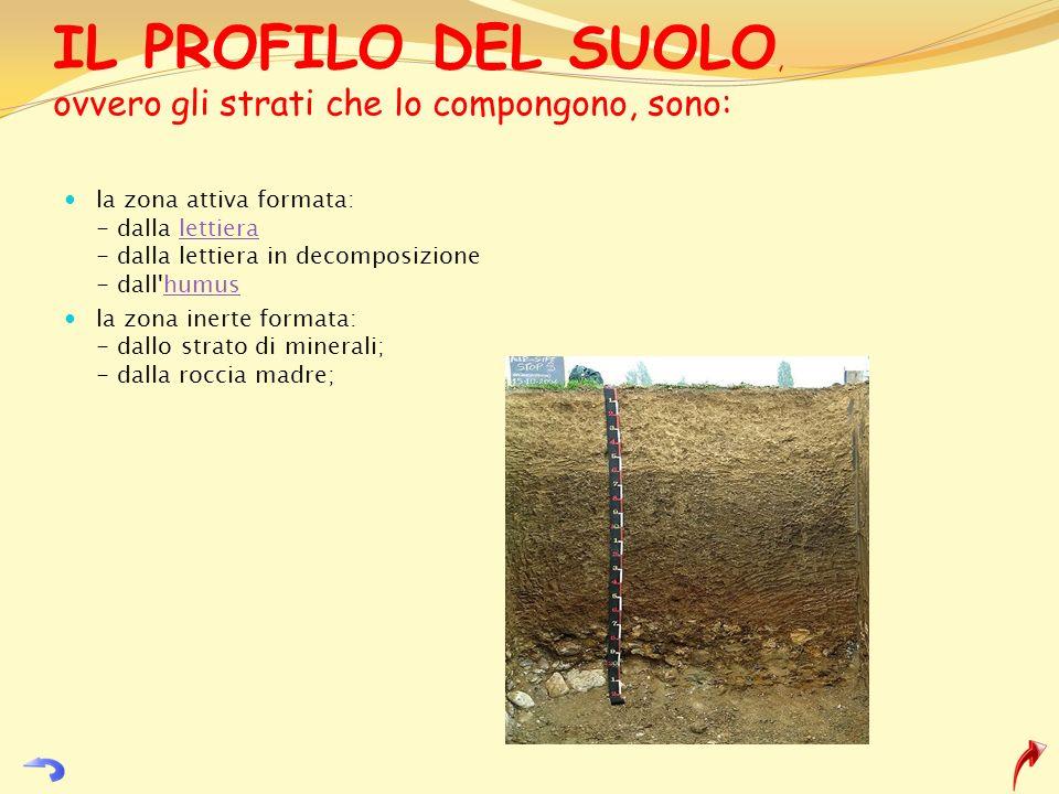 IL PROFILO DEL SUOLO, ovvero gli strati che lo compongono, sono: