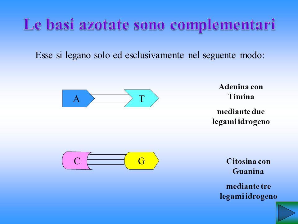 Le basi azotate sono complementari
