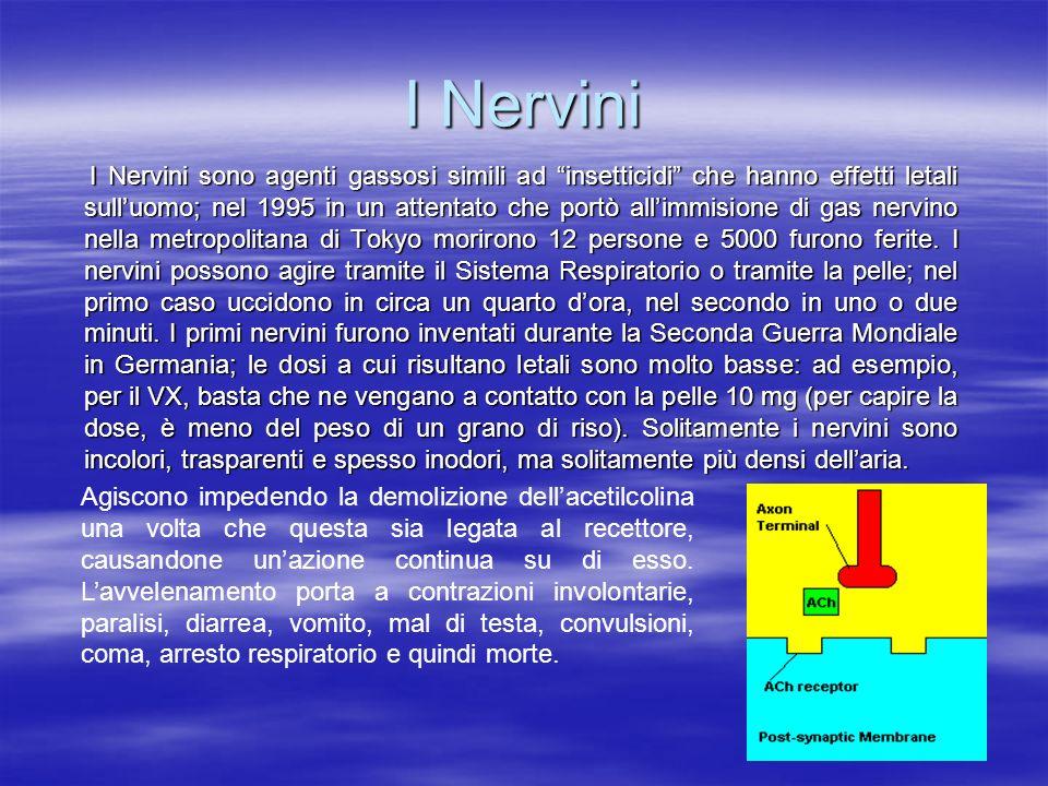 I Nervini