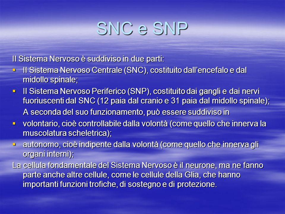 SNC e SNP Il Sistema Nervoso è suddiviso in due parti: