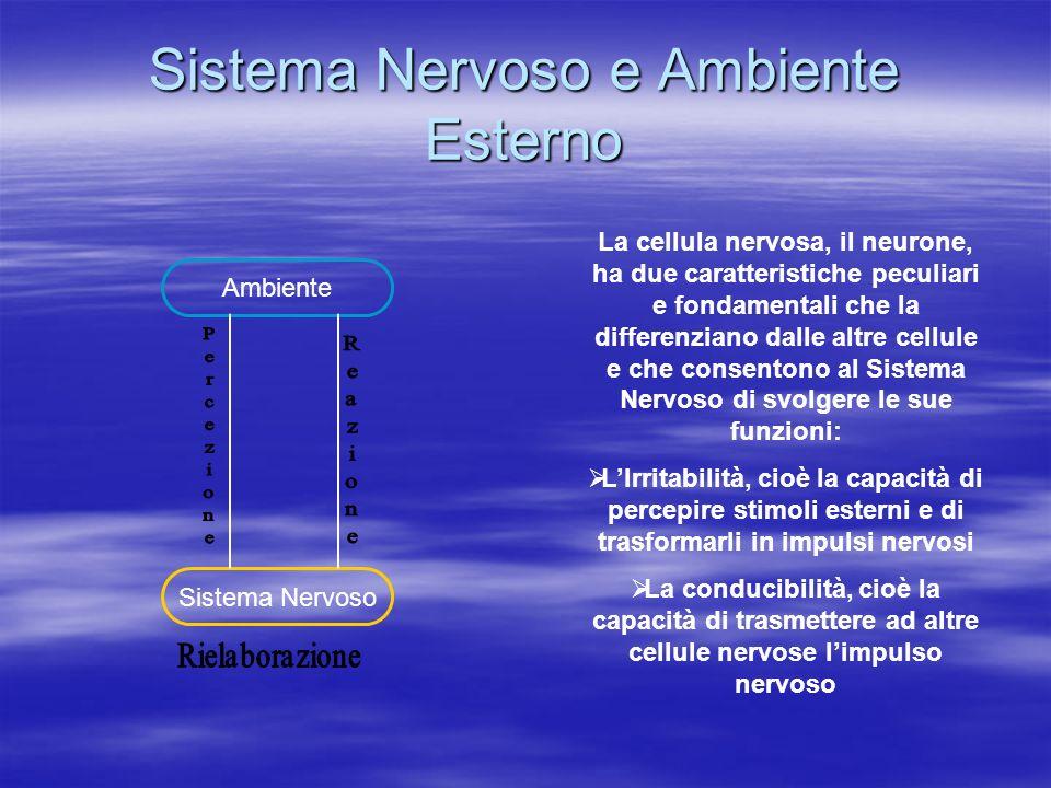 Sistema Nervoso e Ambiente Esterno